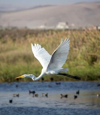 Humedal rio Lluta 2