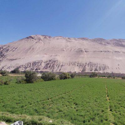 Camino a Pueblo de Molinos Valle de Lluta