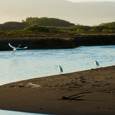 Humedal Río Lluta grupo de aves migratorias II Región de Arica y Parinacota