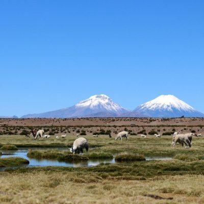 Altiplano Arica y Parinacota
