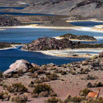 Lagunas Cota cotani Parque Nacional Lauca Arica y Parinacota