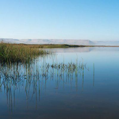 Lagunas Humedal Río Lluta Región de Arica y Parinacota