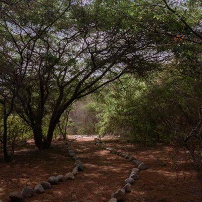 Monumento Natural Picaflor Arica bosque habitat 22