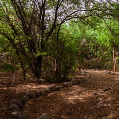 Monumento Natural Picaflor Arica bosque habitat ed