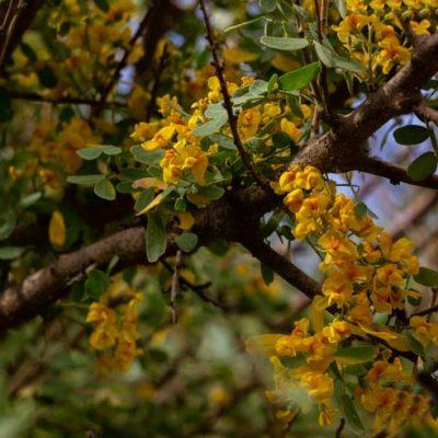 Monumento Natural Picaflor Arica bosque habitat flores ed