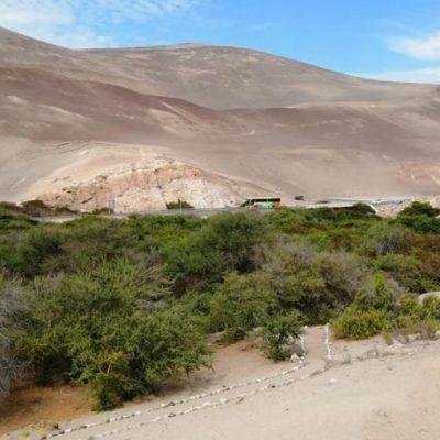 Monumento Natural Picaflor Arica vista panorámica ed