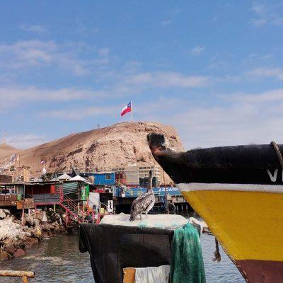 Muelle Pesquero Arica vista Morro de Arica