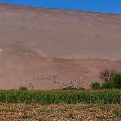 Valle de Chaca plantación choclos